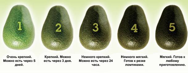 foto avokado polza 5